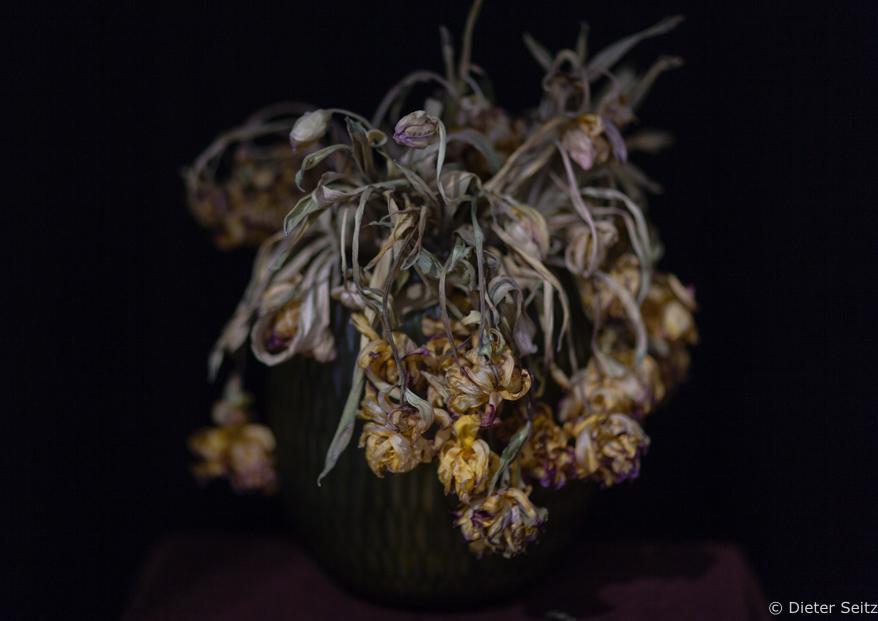 1/11 - Moon Flowers
